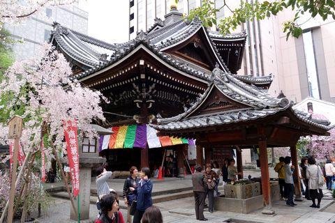 六角堂の桜 本堂