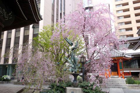 六角堂の桜 いけばなのモチーフ