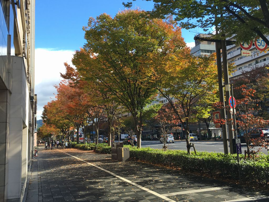 京都 御池通の歩道