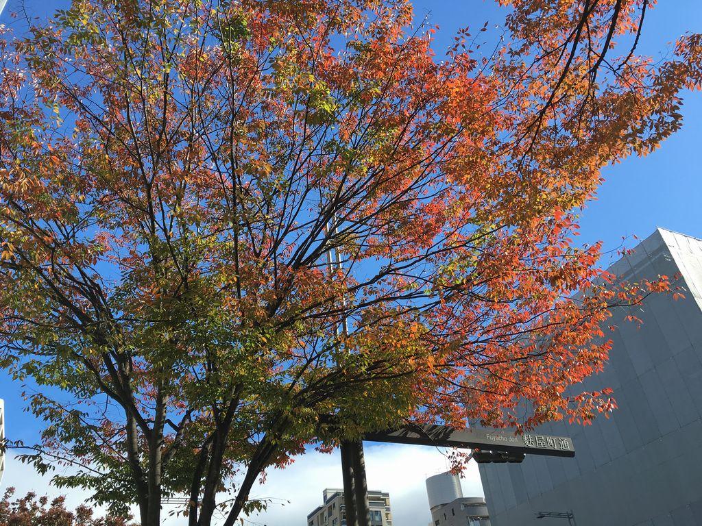 御池通ケヤキの紅葉 麩屋町御池角