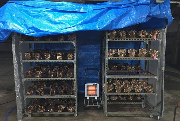 しいたけ菌床栽培 実験用温室