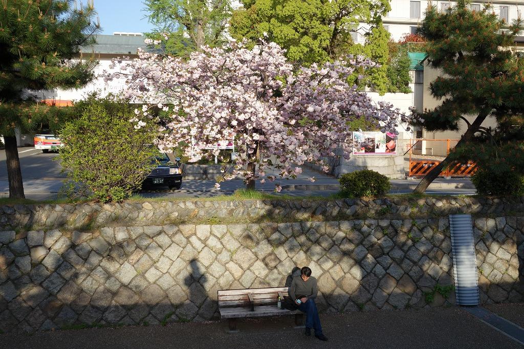 京都 堀川の遊歩道 ベンチで一服