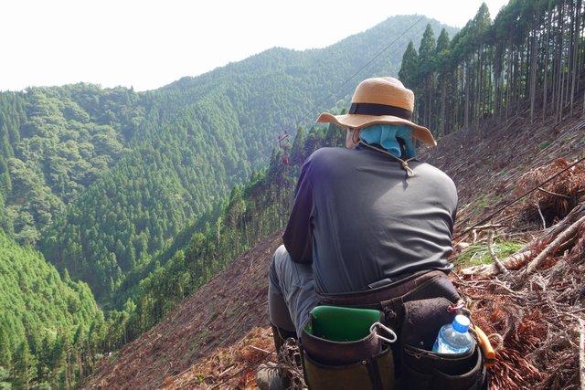 山いちば 山林を身近に