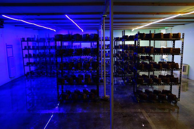 青色LEDテープライト しいたけ栽培