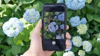 写真を撮るだけで花や植物の名前がわかるSNSアプリ「GreenSnap(グリーンスナップ)」で花の名前を調べよう