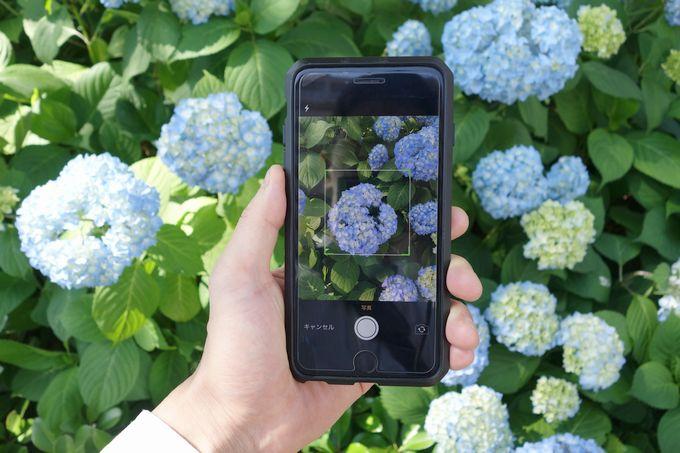 GreenSnap 花の名前を調べる