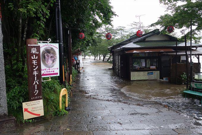 増水した桂川 嵐山モンキーパーク